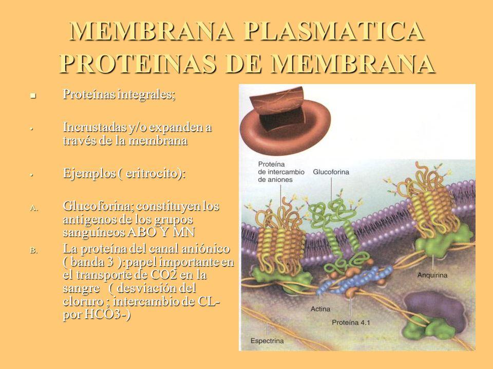 MEMBRANA PLASMATICA PROTEINAS DE MEMBRANA