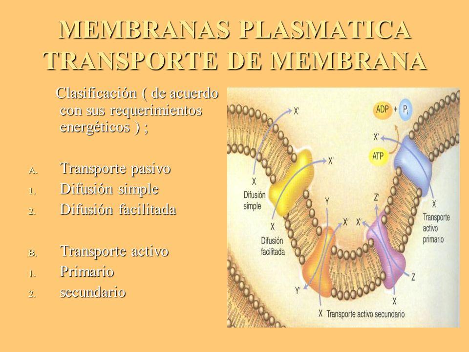 MEMBRANAS PLASMATICA TRANSPORTE DE MEMBRANA