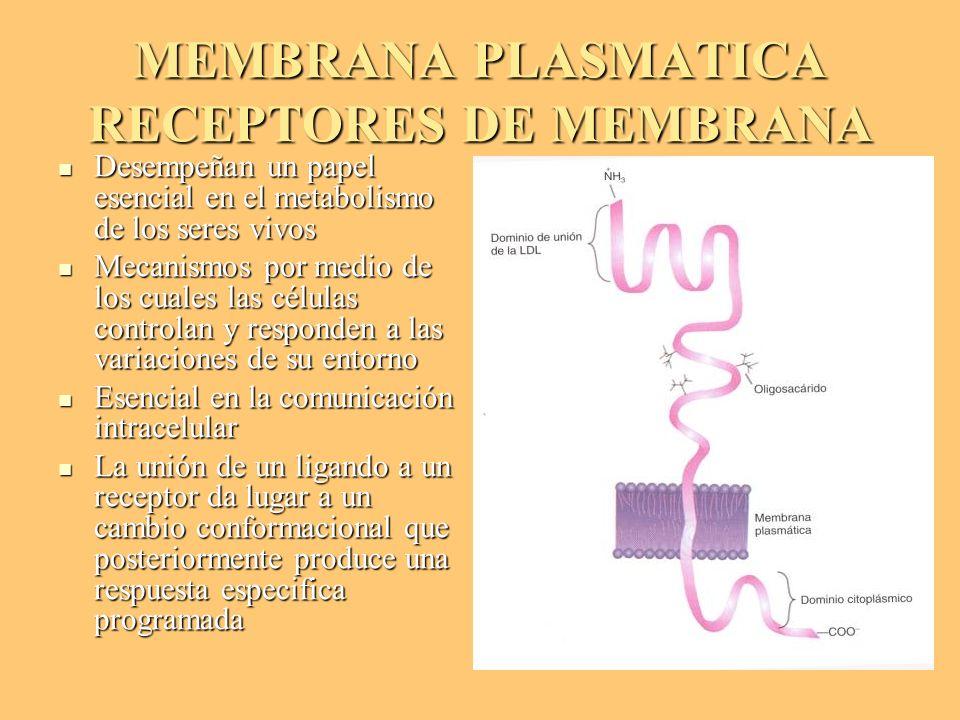 MEMBRANA PLASMATICA RECEPTORES DE MEMBRANA