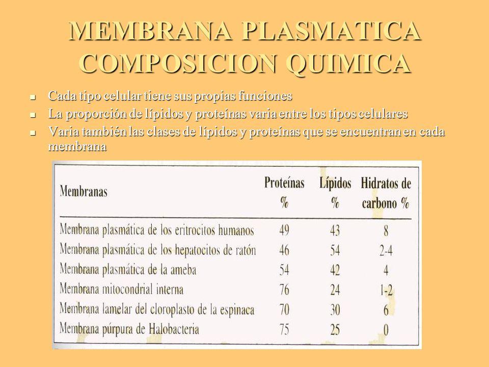MEMBRANA PLASMATICA COMPOSICION QUIMICA