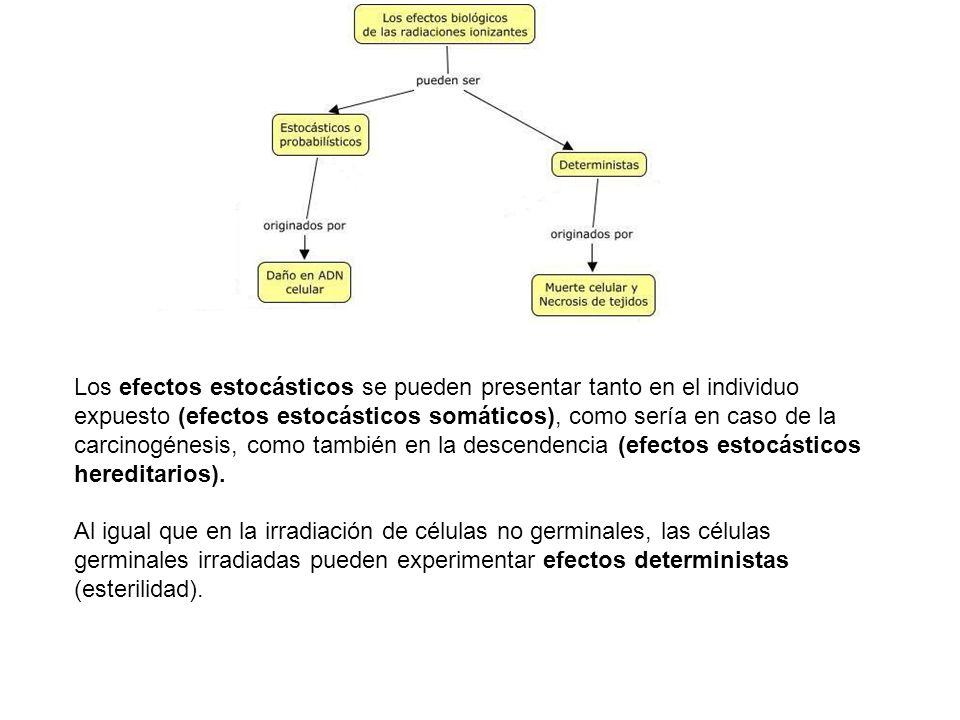 Los efectos estocásticos se pueden presentar tanto en el individuo expuesto (efectos estocásticos somáticos), como sería en caso de la carcinogénesis, como también en la descendencia (efectos estocásticos hereditarios).
