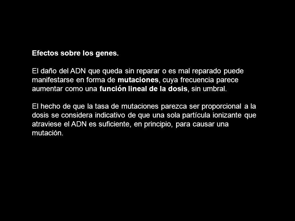 Efectos sobre los genes.