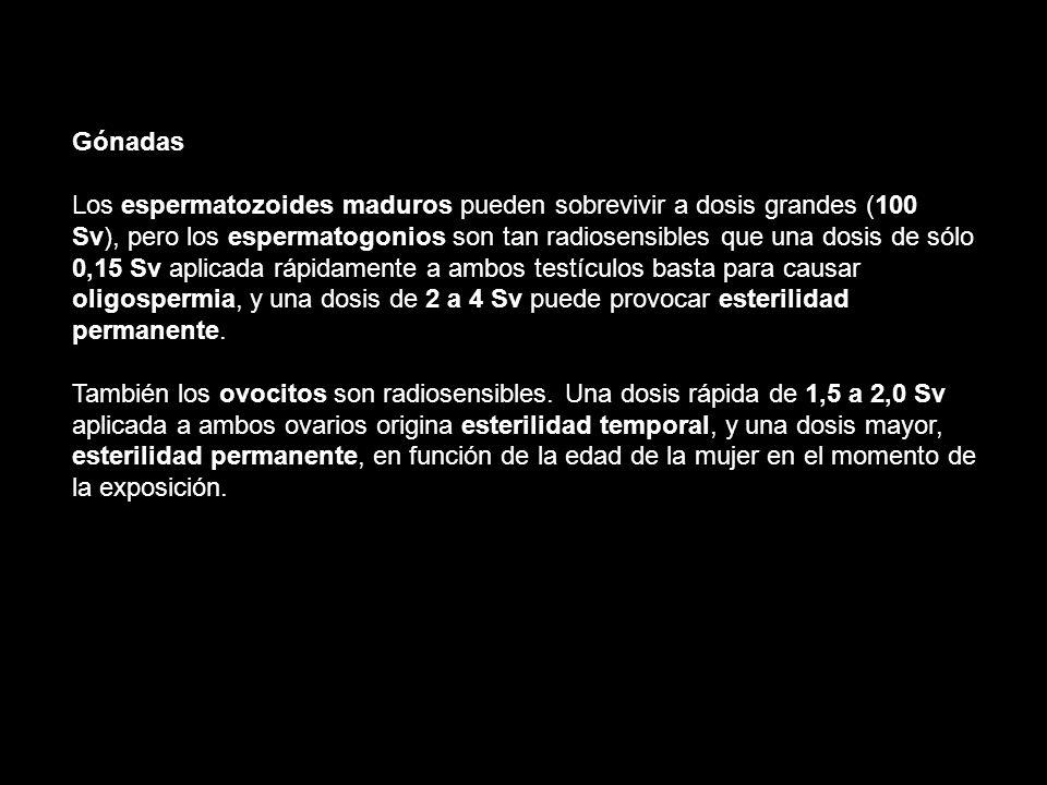 Gónadas Los espermatozoides maduros pueden sobrevivir a dosis grandes (100.