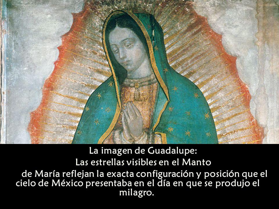 La imagen de Guadalupe: Las estrellas visibles en el Manto