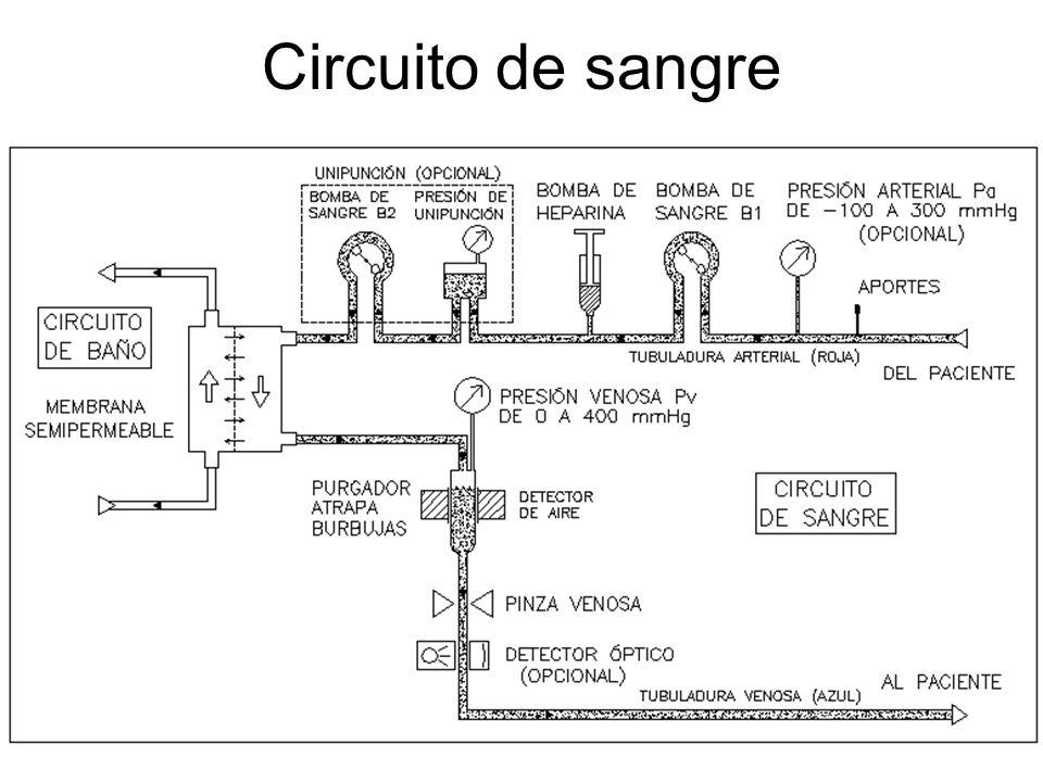 Circuito de sangre