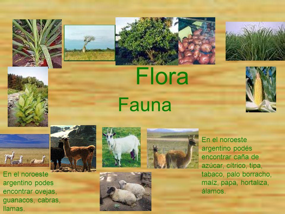 Flora Fauna. En el noroeste argentino podés encontrar caña de azúcar, cítrico, tipa, tabaco, palo borracho, maíz, papa, hortaliza, álamos.