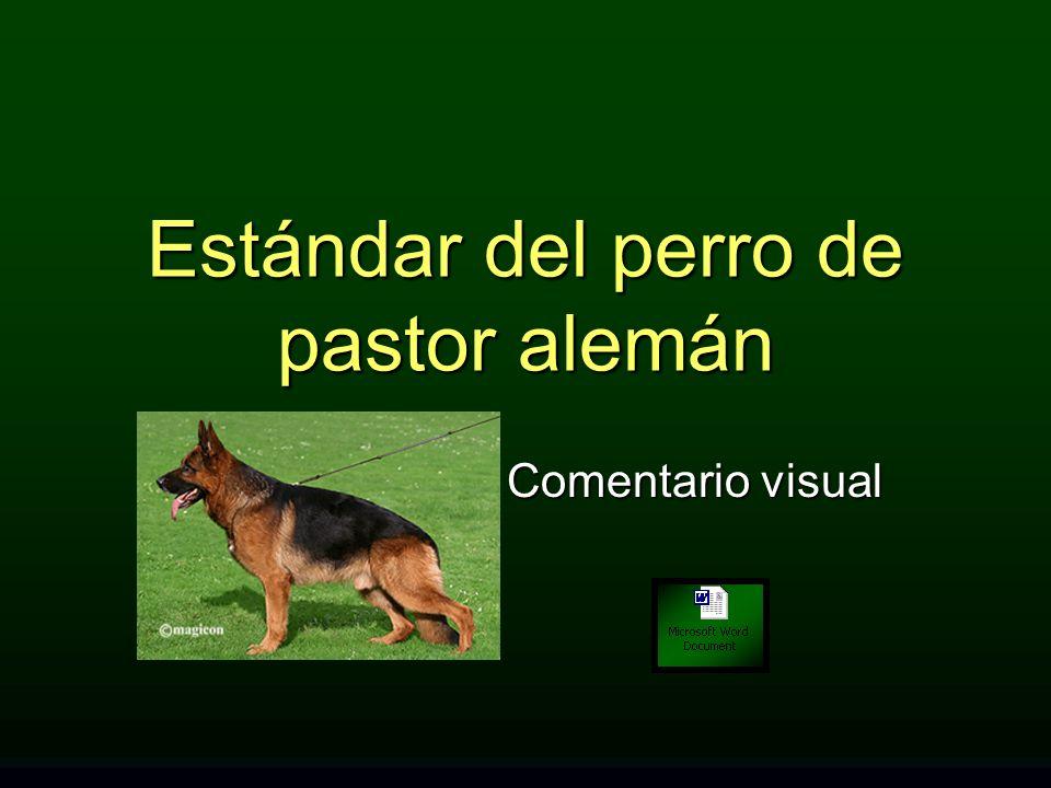 Estándar del perro de pastor alemán