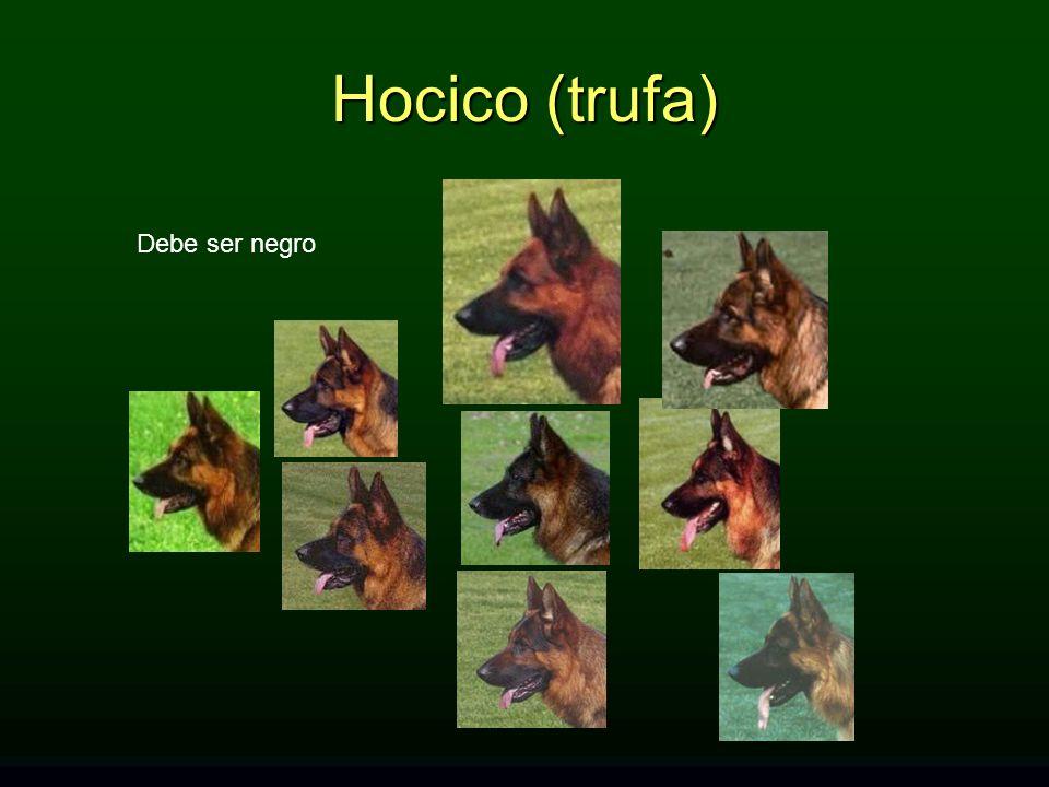 Hocico (trufa) Debe ser negro HOCICO (trufa): Debe ser negro.