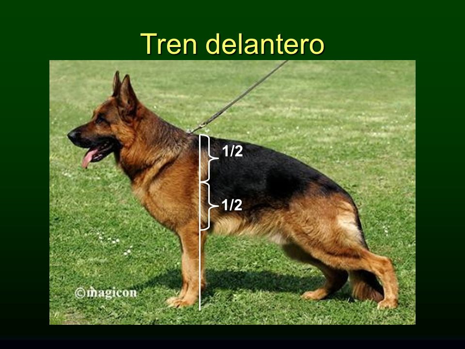 Tren delantero 1/2 TREN DELANTERO: