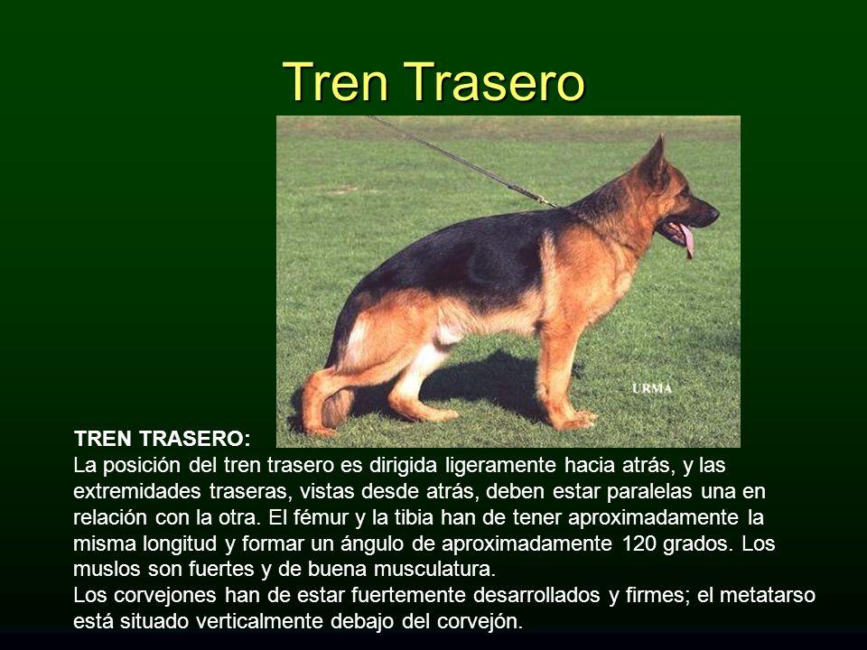 Tren Trasero TREN TRASERO: