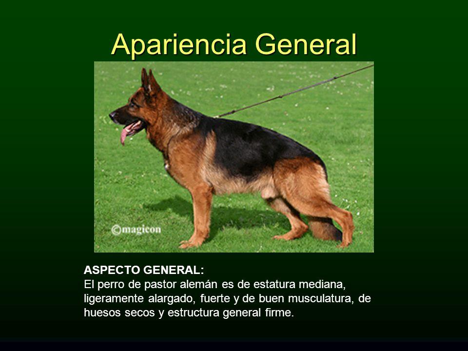 Apariencia General ASPECTO GENERAL: