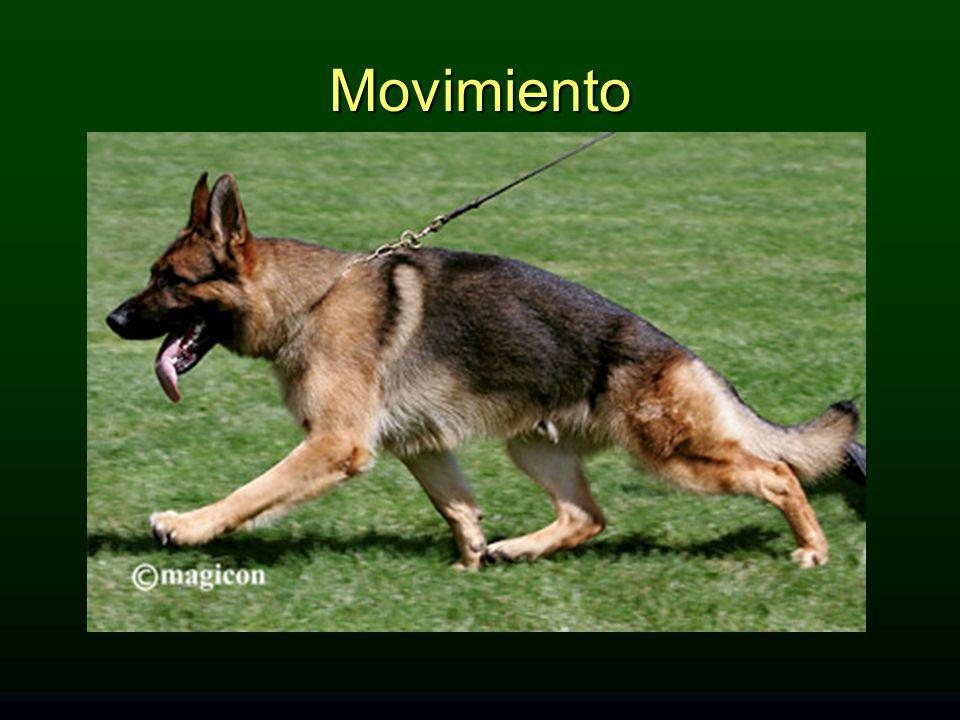 Movimiento MOVIMIENTO: