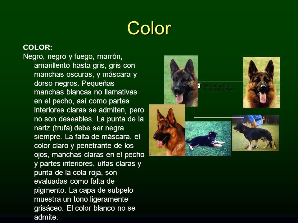 Color COLOR:
