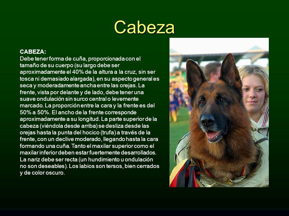 Cabeza CABEZA: