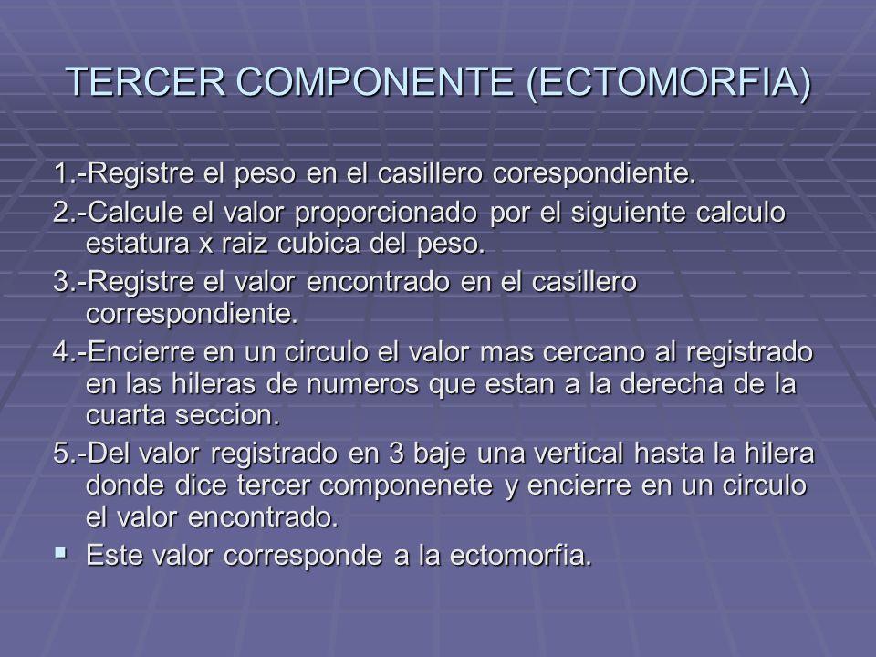 TERCER COMPONENTE (ECTOMORFIA)