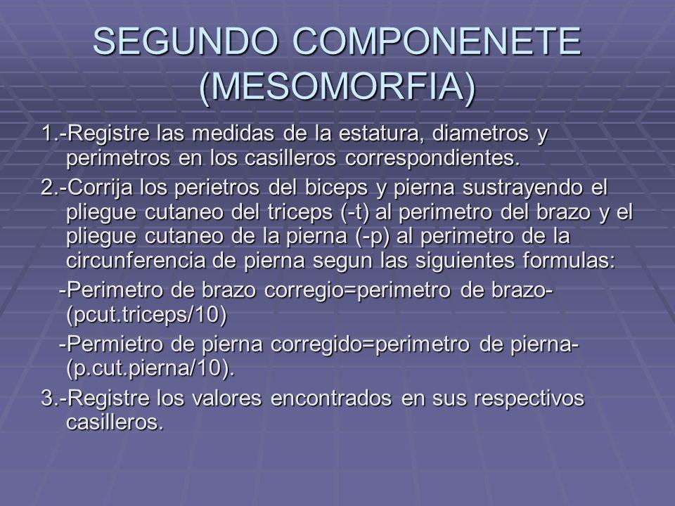 SEGUNDO COMPONENETE (MESOMORFIA)