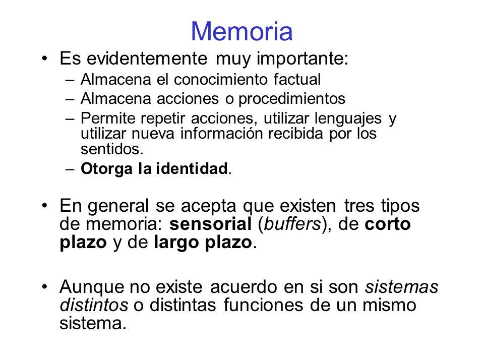 Memoria Es evidentemente muy importante: