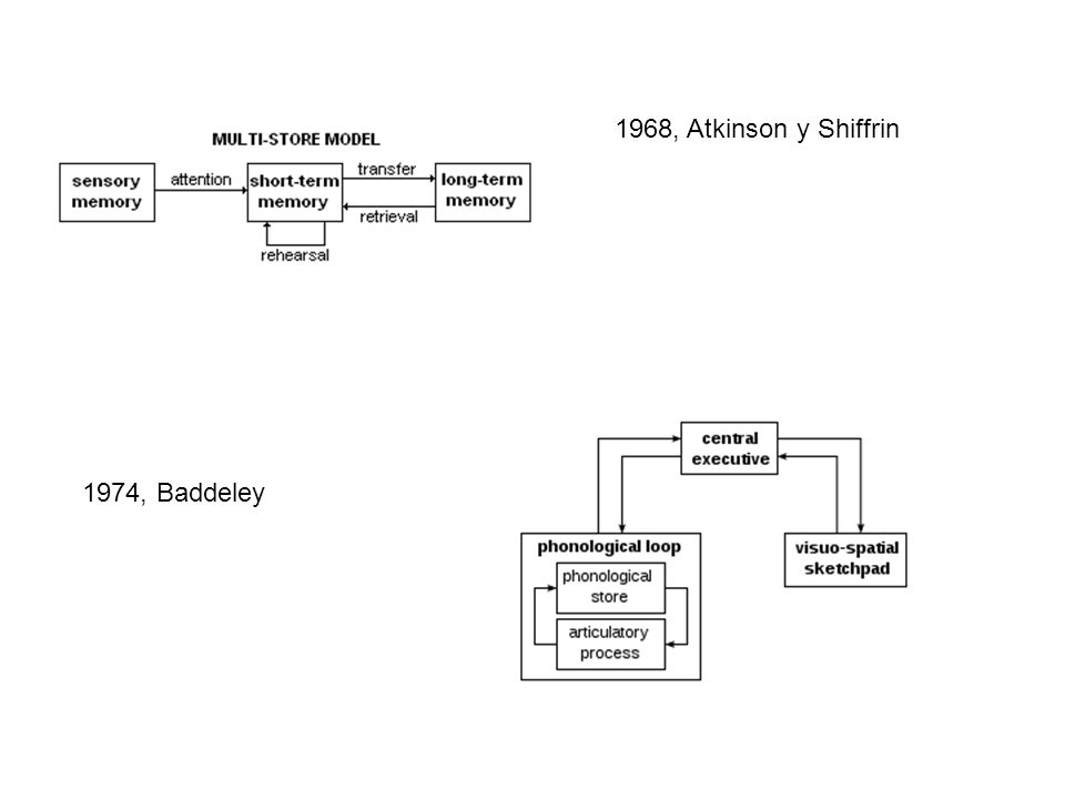 1968, Atkinson y Shiffrin 1974, Baddeley