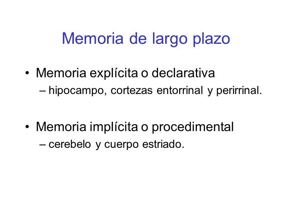 Memoria de largo plazo Memoria explícita o declarativa