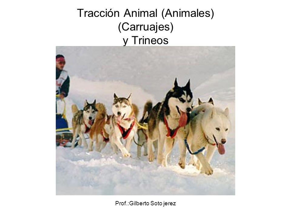 Tracción Animal (Animales) (Carruajes) y Trineos
