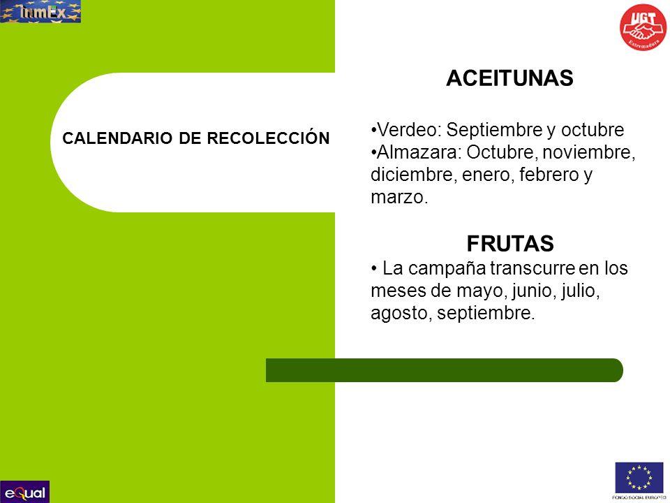ACEITUNAS FRUTAS Verdeo: Septiembre y octubre