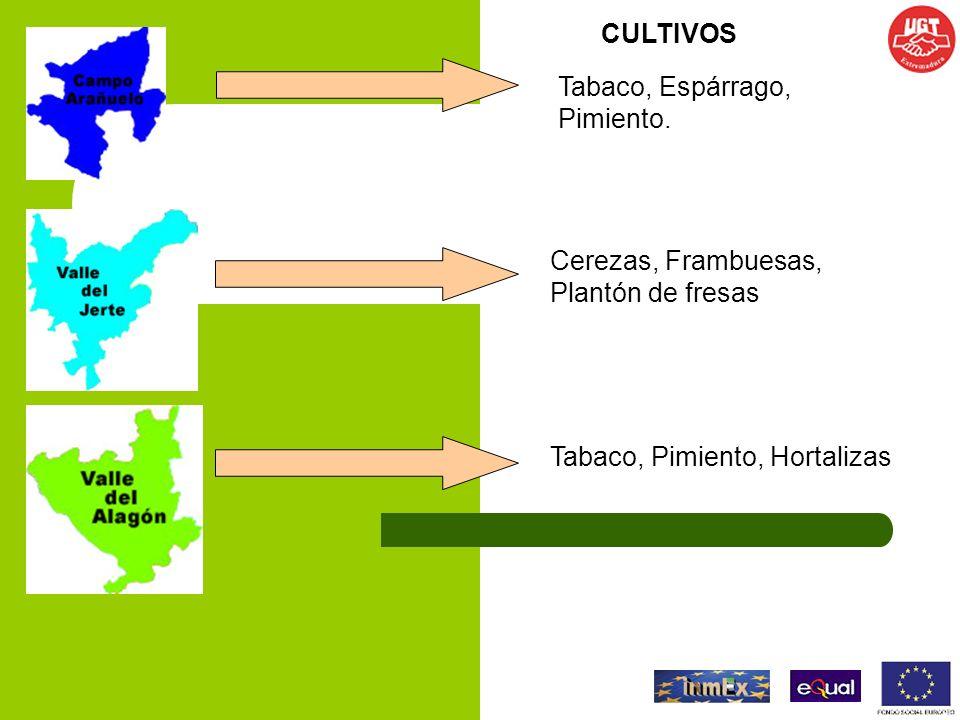 CULTIVOS Tabaco, Espárrago, Pimiento. Cerezas, Frambuesas, Plantón de fresas.