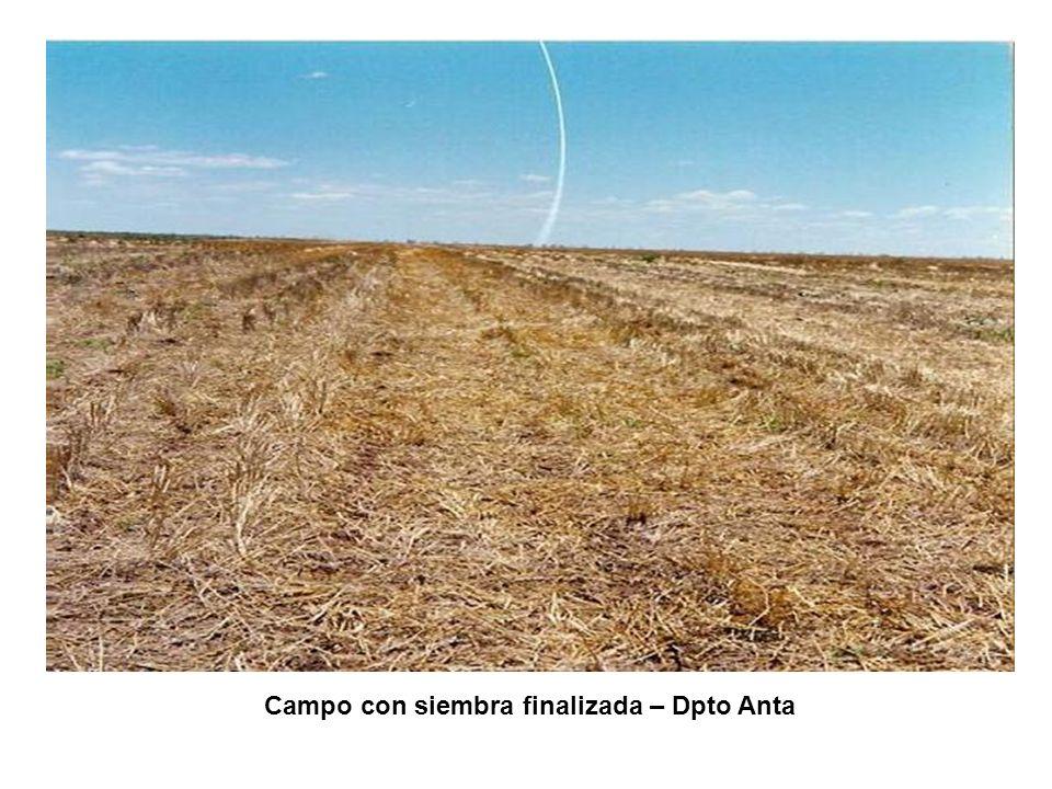 Campo con siembra finalizada – Dpto Anta