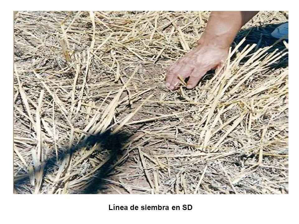 Línea de siembra en SD