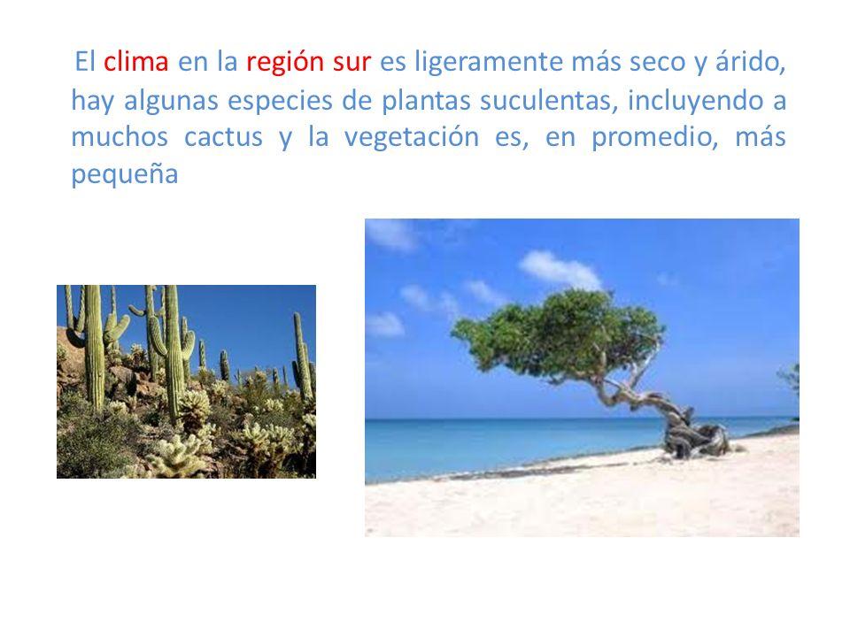 El clima en la región sur es ligeramente más seco y árido, hay algunas especies de plantas suculentas, incluyendo a muchos cactus y la vegetación es, en promedio, más pequeña