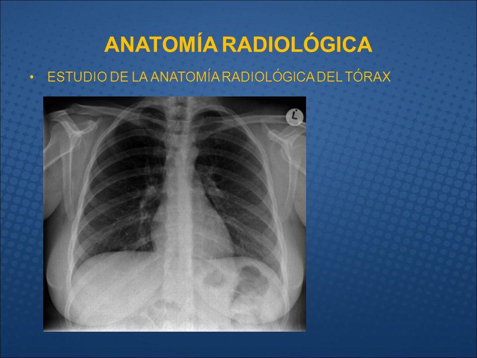 Magnífico Definición Anatomía Radiográfica Embellecimiento ...