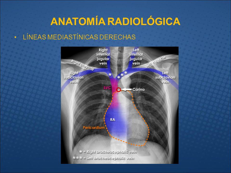 Fantástico Línea Central De La Anatomía Colocación Elaboración ...