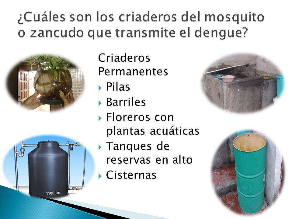 ¿Cuáles son los criaderos del mosquito o zancudo que transmite el dengue