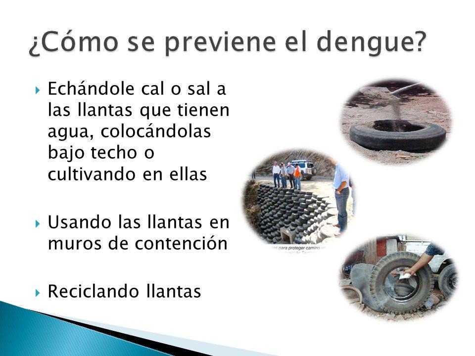 ¿Cómo se previene el dengue