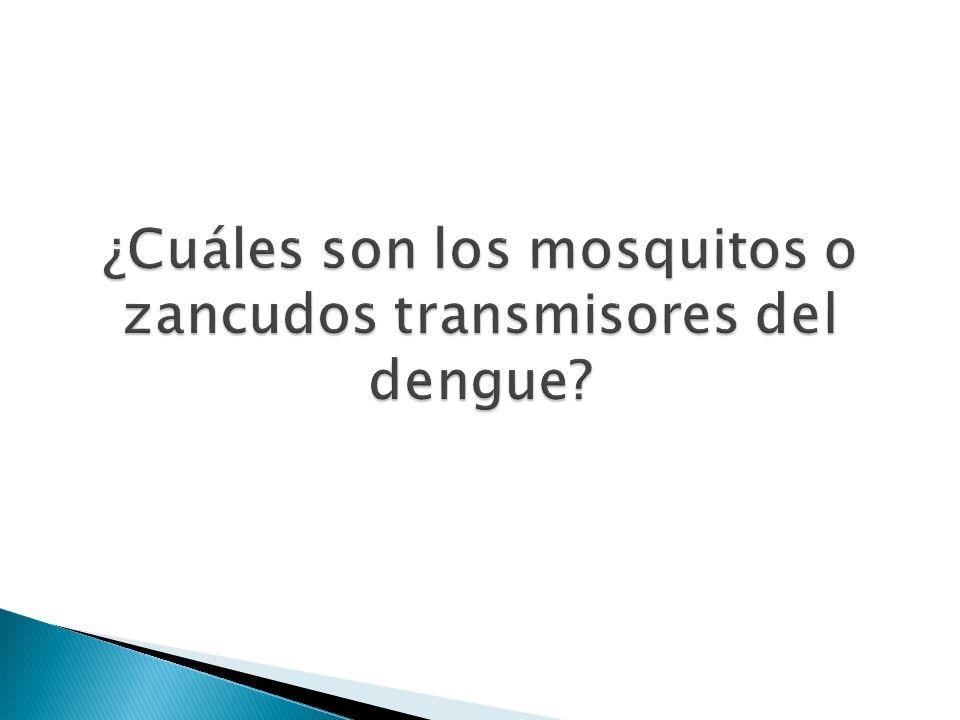 ¿Cuáles son los mosquitos o zancudos transmisores del dengue