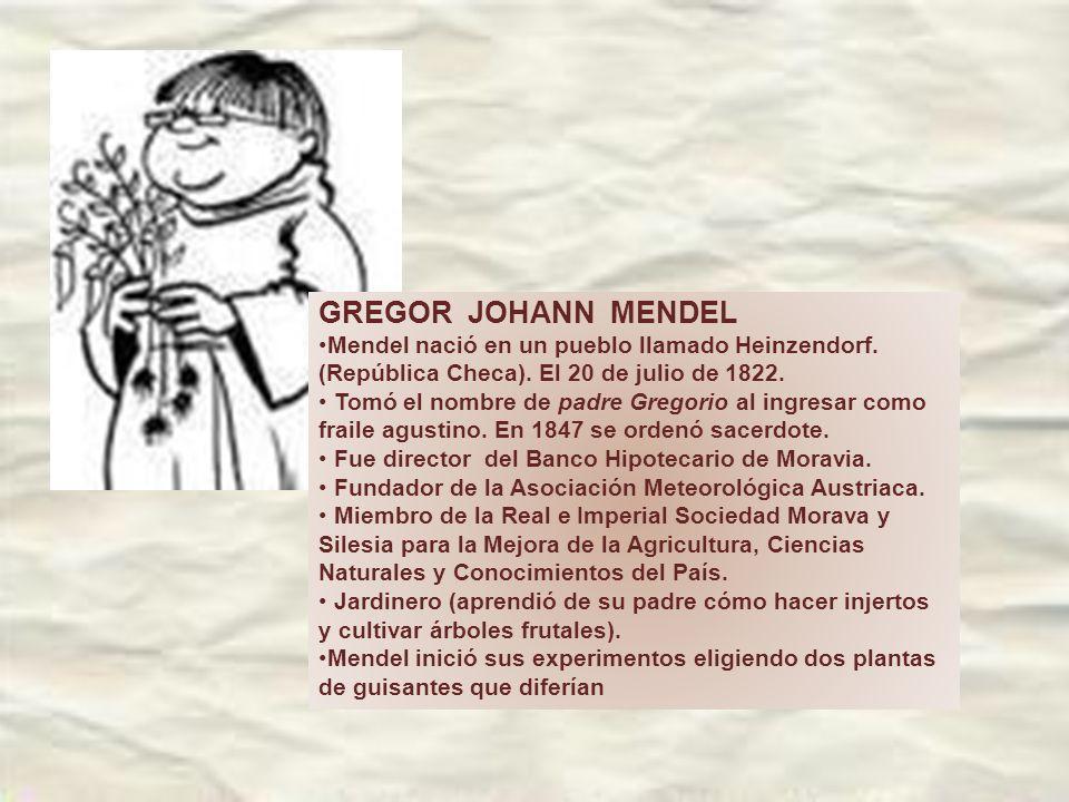 GREGOR JOHANN MENDEL Mendel nació en un pueblo llamado Heinzendorf. (República Checa). El 20 de julio de 1822.