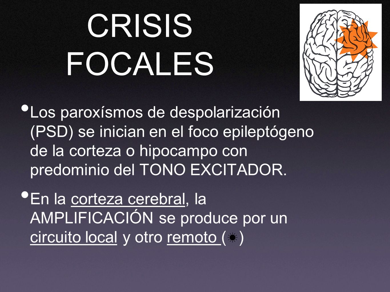 CRISIS FOCALES