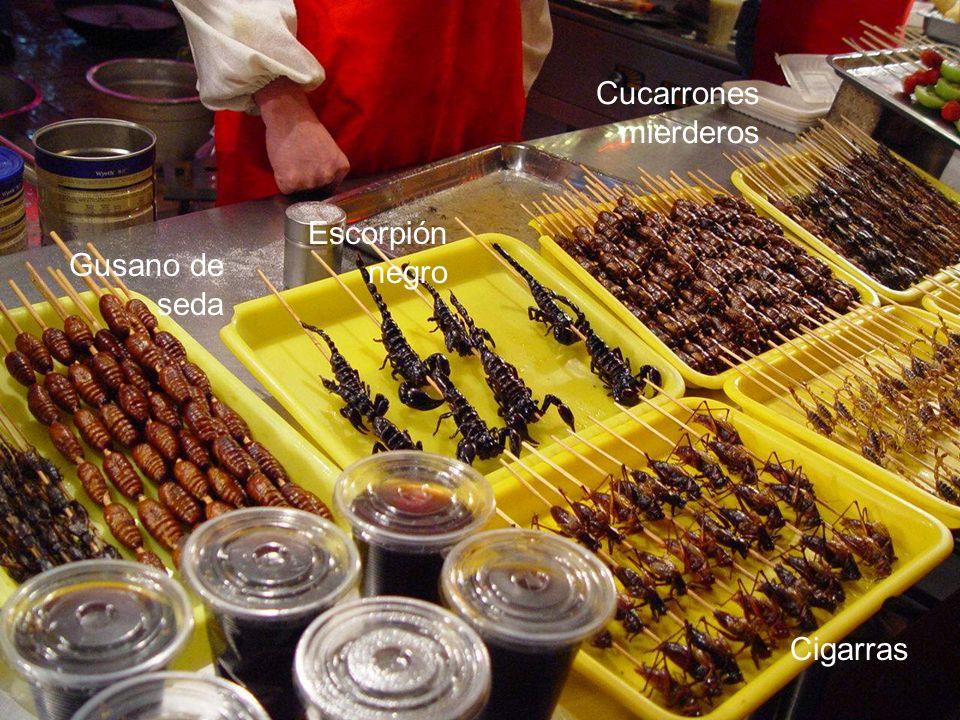Cucarrones mierderos Escorpión negro Gusano de seda Cigarras