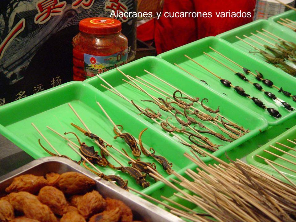 Alacranes y cucarrones variados