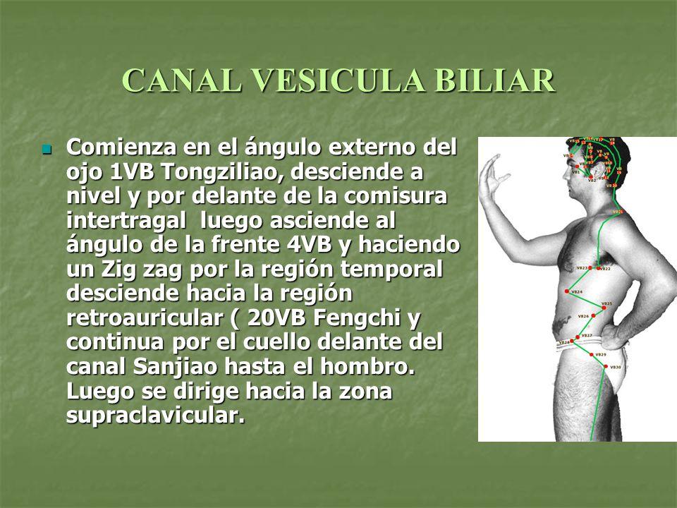 CANAL VESICULA BILIAR