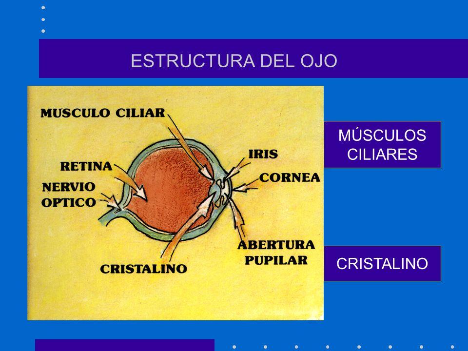 ESTRUCTURA DEL OJO MÚSCULOS CILIARES CRISTALINO
