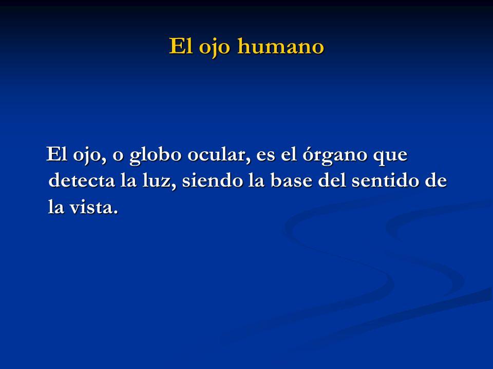 El ojo humano El ojo, o globo ocular, es el órgano que detecta la luz, siendo la base del sentido de la vista.