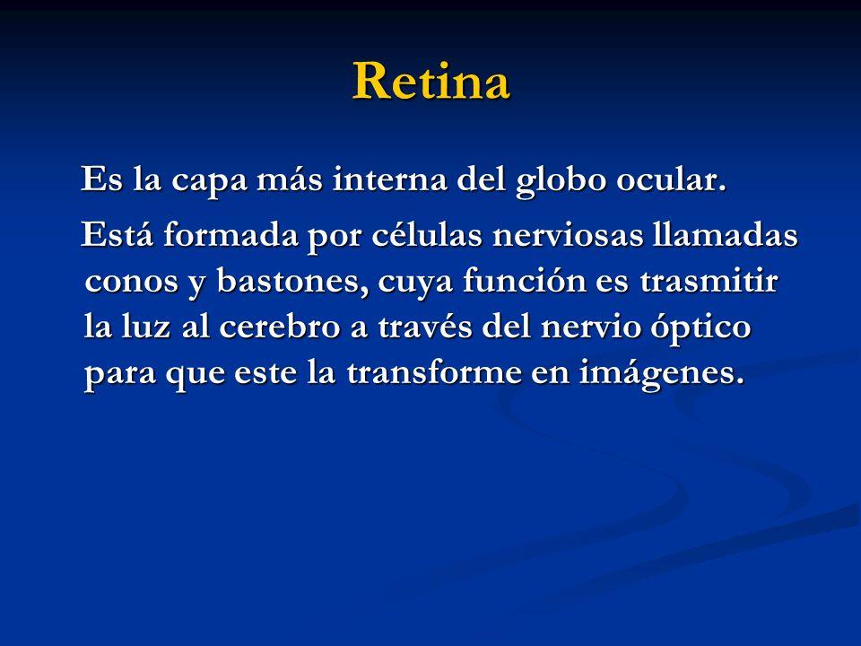 Retina Es la capa más interna del globo ocular.