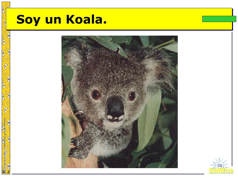 Soy un Koala. Introduction