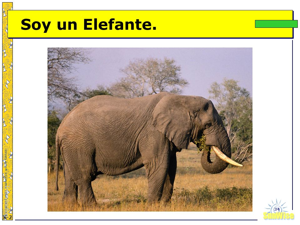 Soy un Elefante. Introduction