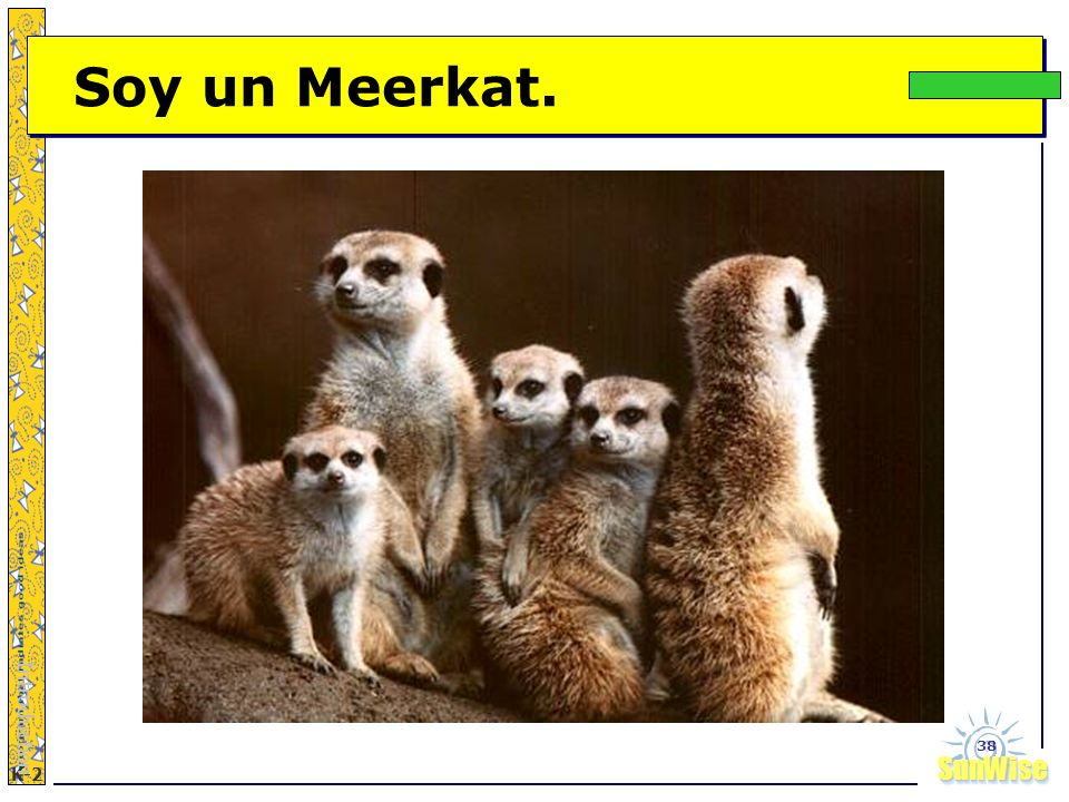 Soy un Meerkat. Introduction