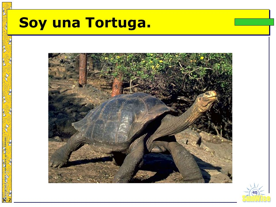 Soy una Tortuga. Introduction
