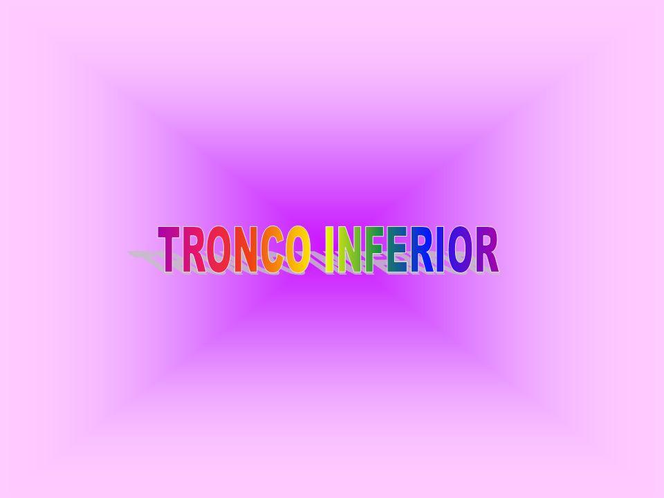 TRONCO INFERIOR