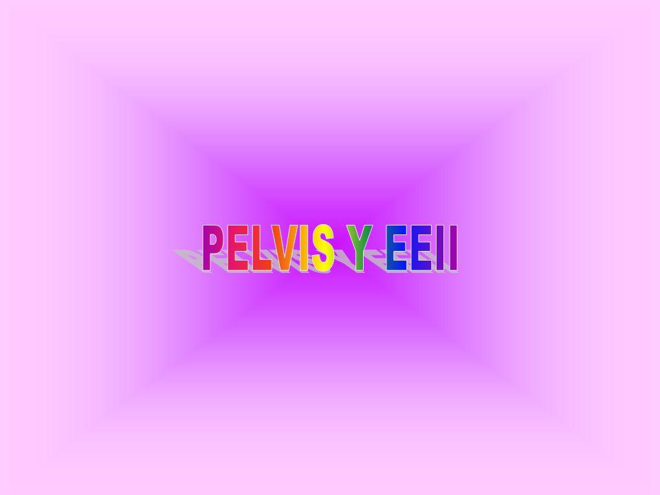 PELVIS Y EEII