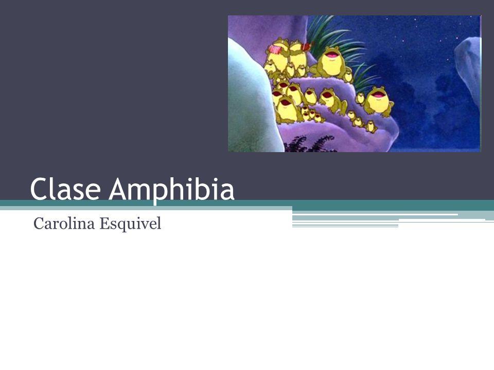 Clase Amphibia Carolina Esquivel