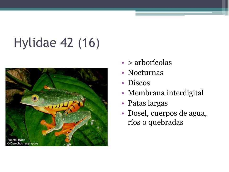 Hylidae 42 (16) > arborícolas Nocturnas Discos
